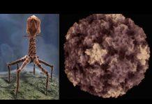 Upside Down Pentagram, Inside the Cold Virus & Lab Made, Ebola Patent # Owned by US Gov.