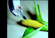 New GMO Crops Eat Your Guts from the Inside, Almost Everything You Consume is Genetically Modified
